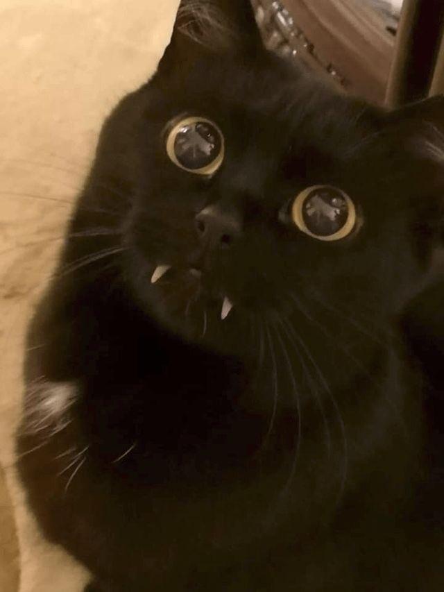 ảnh Mèo đen đẹp (28)