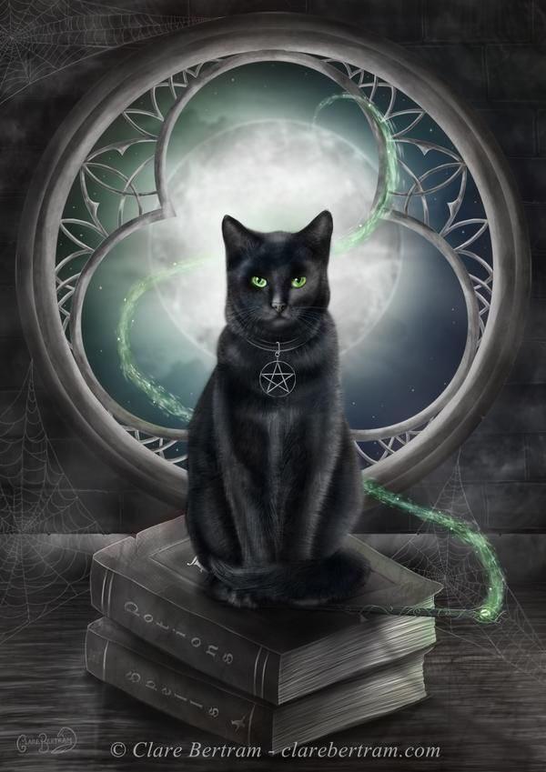 ảnh Mèo đen đẹp (34)