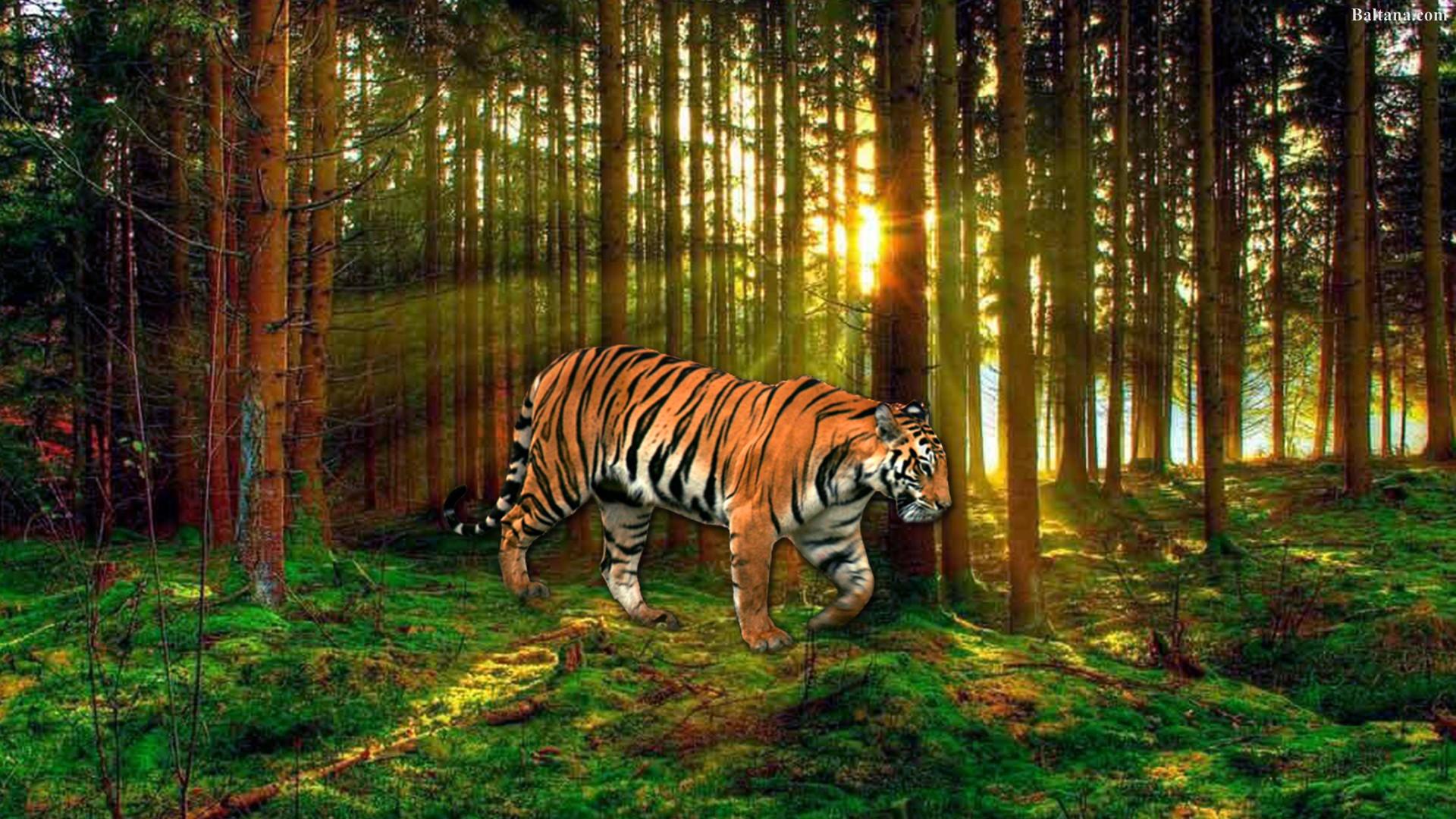 Chiêm Ngưỡng 500 Hình ảnh Con Hổ đẹp Nhất Thế Giới 7