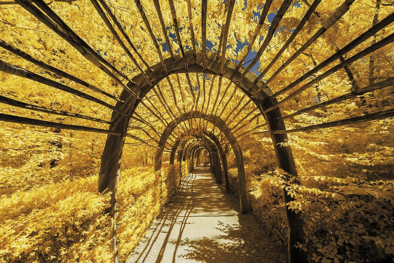 Top 68 Hình ảnh Bìa Màu Vàng Tuyệt đẹp Dành Cho điện Thoại, Máy Tính 41